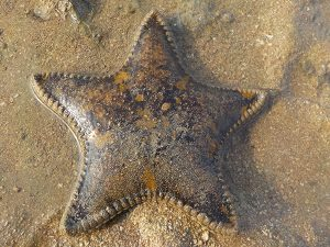 It's Written in the Sea Stars…