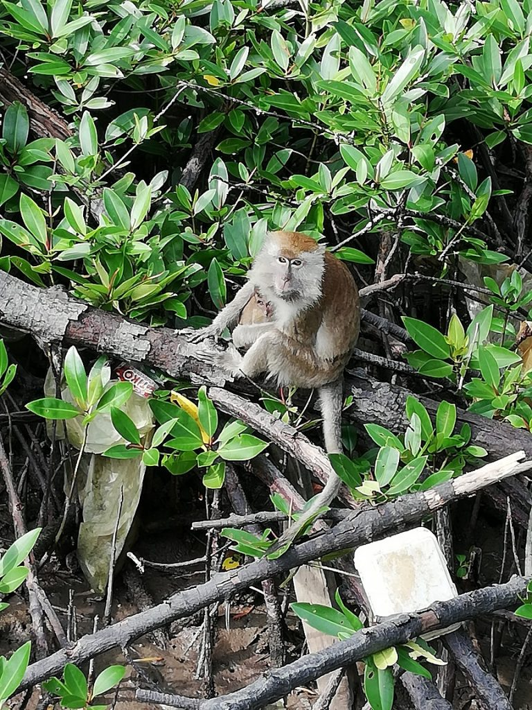 Making Friends with Macaques