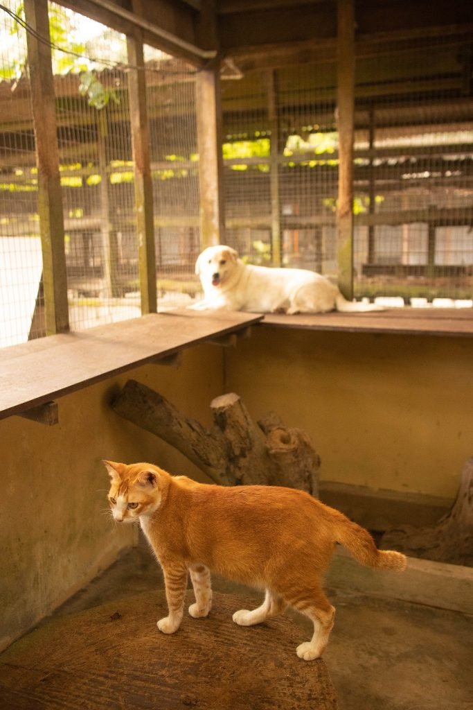 Noah's Ark Natural Animal Sanctuary (NANAS) Private Tour Experience