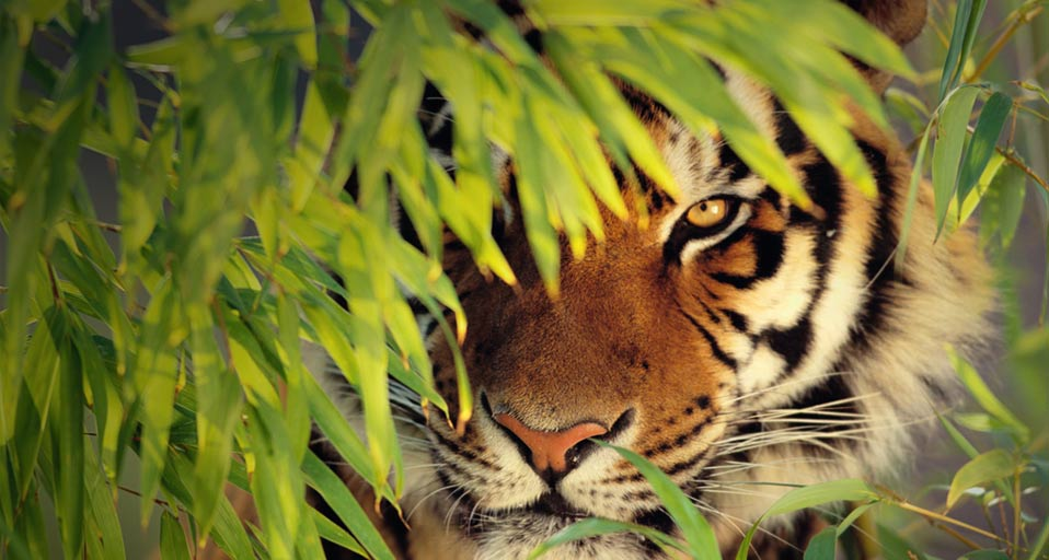 Hunters Prepare to be Hunted Warns Johor Ruler